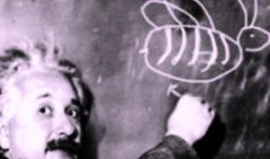 """აინშტაინის გამოცანა """"ვინ ზრდის თევზს?"""" - აბა, თუ ამოხსნით?!"""