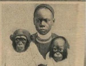 მეცნიერი, რომელიც აფრიკაში მაიმუნებისგან გაუპატიურებულ ქალებს და მათ შვილებს  ეძებდა