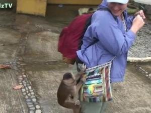პოლიციამ დააკავა თაღლითები,რომლებმაც მაიმუნებს ქურდობა ასწავლეს