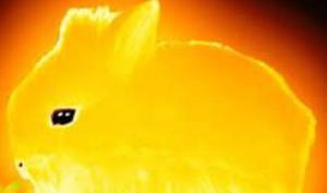 """ალბათ, ბევრს გაგიგიათ  """"მზის კურდღელი"""", მაგრამ ცოტამ თუ იცის მისი მნიშვნელობა"""