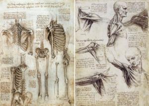 ადამიანის ორგანოები