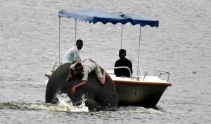 ინდუსმა ჩაძირვის საფრთხის ქვეშ მყოფი სპილო დაითანხმა ნაპირზე გასვლაში