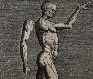 შოკისმომგვრელი ფაქტები ადამიანის სხეულის შესახებ, რომლის შესახებაც არაფერი იცოდით