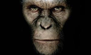 მსგავსი რამ თანამედროვეობას არ ახსოვს, აფრიკაში შიმპანზეებმა ომი გამოუცხადეს გორილებს და სასტიკად დაამარცხეს