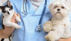 კატა და ძაღლი კოვიდვაქცინის ნაცვლად?!
