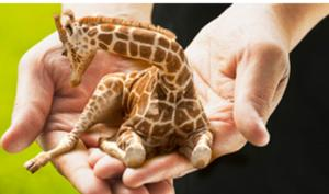 სახალისო ლექსი-გამოცანები გარეულ ცხოველებზე: აბა, რამდენს გამოიცნობთ?!