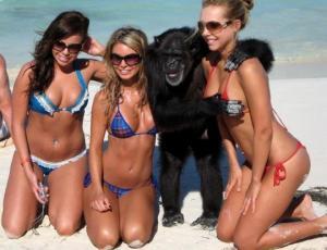 როცა საქმე მაიმუნებს ეხება – სახალისო ისტორიები