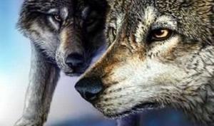 სურათზე კიდევ ერთი მგელია - აბა, თუ მოძებნით?!