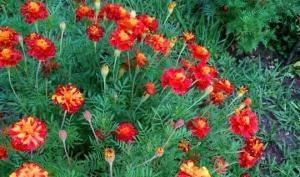 ყვავილებს შორის ხმელი ჯოხი გდია - აბა, 15 წამში თუ მოძებნით?!