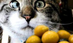 კატა მწვანე ზეთისხილმა დაათრო - ნახეთ, როგორ გაგრძელდა ეს სასაცილო ისტორია