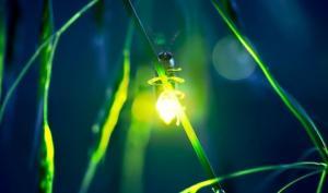 3 ბიოლუმინესცენციური ცხოველი და მწერი, რომელსაც ნათების საოცარი უნარი აქვს