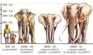 15 საინტერესო ფაქტი სპილოების შესახებ
