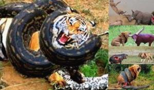 ცხოველები, რომლებიც არ დანებდნენ და სიცოცხლისათვის სასტიკ ბრძოლაში  გაიმარჯვეს