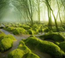 მისტიკური ტყეები, რომელთა  ხილვისას თავს ზღაპარში  იგრძნობთ