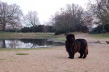 3 ყველაზე დიდი ძაღლი