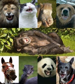 ცხოველები იცინიან