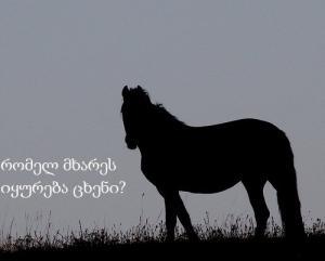 რას ფიქრობთ, რომელ მხარეს იყურება ცხენი?