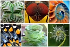 გასაოცარი სილამაზე-ბუნების შექმნილი  ფერები და გეომეტრია