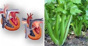 რა ხდება ადამიანის ორგანიზმში ნიახურის ჭამის შემდეგ, ნახევარ საათში განკურნებული უამრავი დაავადება