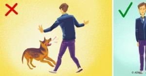 როგორ მოვიქცეთ,როცა ძაღლი თავს გვესხმის