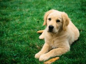 ძალიან სევდიანი ისტორია სერგოზე და ძაღლზე