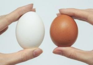 თეთრი კვერცხი უფრო სასარგებლოა თუ ყავისფერი? - ეს უნდა ვიცოდეთ!