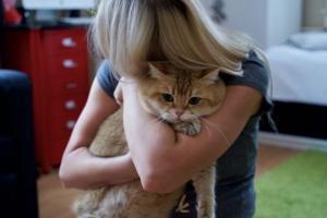 ერთ ქალაქში არსებობს  ნამდვილი ჩექმებიანი კატა ჰაჩიკო