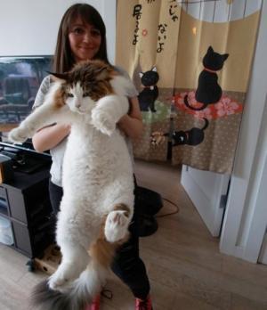 ასეთი კატა გინახავთ?