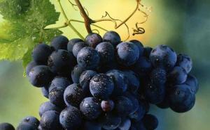 პირველი ქართული ღვინო... ეს საინტერესოა 9: