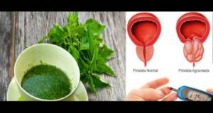 მცენარე, რომელიც წამალზე ძლიერ მოქმედებს, ის კურნავს პროსტატას, სიმსივნესა და დიაბეტს