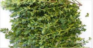 უამრავი სასარგებლო თვისებების მქონე მცენარე, გაიგეთ უფრო მეტი მის შესახებ