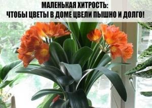 როგორ მოვიქცეთ, რომ ჩვენმა ყვავილებმა დიდხანს და უხვად იყვავილონ