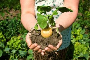 მცენარე, რომელიც კურნავს ჰორმონალურ დარღვევებს,  ანელებს დაბერების პროცესს და ორგანიზმს ავსებს ენერგიით