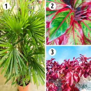15 მცენარე,რომელიც აუცილებელია თქვენი სახლისთვის