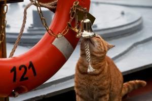 """რუსეთის სამხედრო საზღვაო ფლოტის კრეისერ  """"Москва""""–ზე მსახურობს """"მატროსი"""" სერგეი ივანოვიჩი, რომელიც ადამიანი კი არა კატაა"""