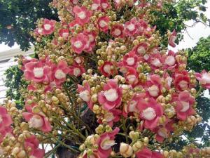 ყველაზე საინტერესო, მცენარეების შესახებ (+ ფოტო – მარიხუანას ღიმილი)