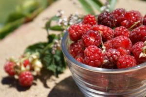 უნიკალური ხილი, რომელიც კურნავს დიაბეტს, გულ-სისხლძარღვთა დაავადებებსა და კუჭ-ნაწლავის პრობლემებს
