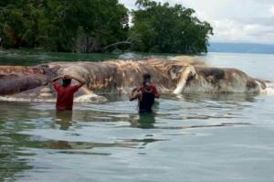 გინახავთ უზარმაზარი კალმარი?