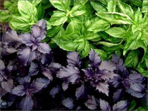 გინდათ გაიძლიეროთ იმუნიტეტი? ეს მცენარე სწორედ ამაში დაგეხმარებათ!