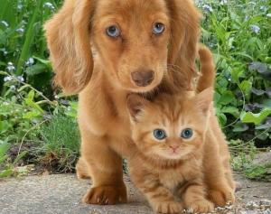 მეცნიერებმა პატრონებისადმი კატების და ძაღლების სიყვარულის დონეები შეადარეს და ორმაგად გაკვირვებულები დარჩნენ