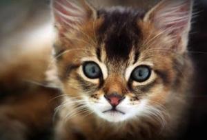 10 საინტერესო ფაქტი კატების შესახებ, რომელიც შესაძლებელია არ იცოდეთ