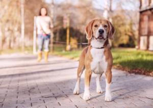 მეცნიერებმა დაადგინეს, თუ როგორ ცნობენ ძაღლები «ცუდ» ადამიანებს