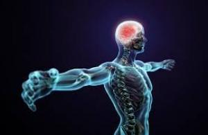 უცნობი ფაქტები ადამიანის ორგანიზმის შესახებ, ეს უნდა იცოდეთ