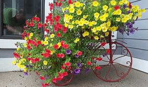 ქოთნის ყვავილები და სხვა მცენარეები – მოვლა, დიზაინი, საინტერესო ფაქტები