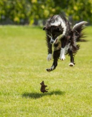 შიშის გრძნობა თურმე არც ძაღლებისთვის ყოფილა უცხო, რასაც ეს სტატია დაგიმტკიცებთ
