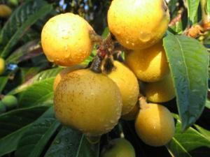 სეზონის ხილი, რომელიც სასარგებლო პროდუქტების ჩამონათვალში ლიდერობს!