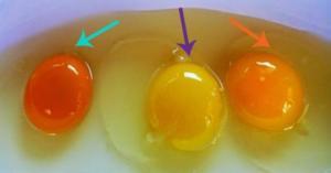 როგორ გავარჩიოთ ხარისხიანი  კვერცხი უხარისხოსგან