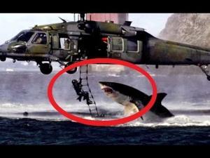 5 დაუჯერებელი გადარჩენა ადამიანებისა, რომლებსაც ზვიგენები დაესხნენ თავს!