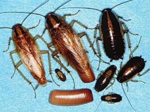 3 უსაფრთხო მეთოდი ტარაკნებთან,ჭიანჭველებთან და კოღოებთან საბრძოლველად