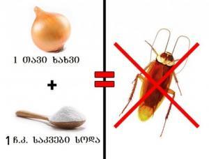 მოიშორეთ სამუდამოდ კოღო, ტარაკანა და ჭიანჭველა სახლიდან! ცდად ნამდვილად ღირს